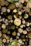 Cuted träd på lös skogbakgrund 50,6 Megapixels 6480 med 4320 PIXEL royaltyfri foto
