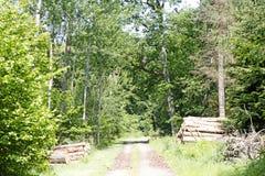 Cuted träd på lös skogbakgrund 50,6 Megapixels 6480 med 4320 PIXEL fotografering för bildbyråer