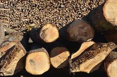 Cutedbomen klaar voor knipsel Stock Foto's