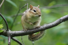 Cuteness on a branch. Royalty Free Stock Image
