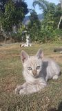 Cutes кота младенца стоковые изображения