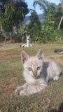Cutes de chat de bébé images stock