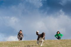 Cutes girls with a dog on a field in the summer royalty free stock photos