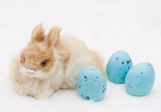 Cutest Easter Bunny Stock Photos