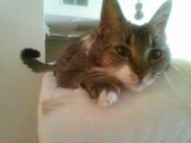 Cutest kitty Stock Photos