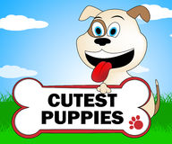 Cutest Puppies Indicates Lovable Purebred And Lovely Dog Royalty Free Stock Images