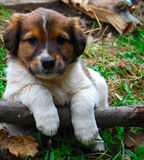 The cutest puppy. Abandoned dog in the forest stock photography