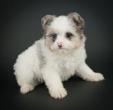 Cutest Puppy Ever! Stock Photography
