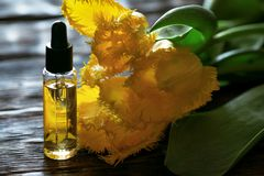 Cuticle oil. Cuticle oil bottle and a yellow tulip flowers on a table. Fingernail care concept stock images