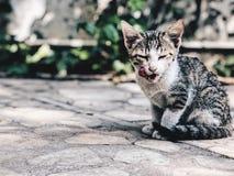 cutie猫 免版税库存照片