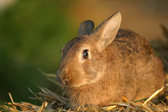 Cutie. Portrait of a cute little bunny stock images
