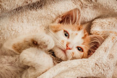 cutie Stock Foto