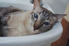 Cat in the sink. Cutie cat in the sink royalty free stock photos