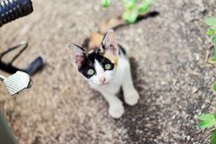 Cutie cat. Tiny cutie cat Stock Photography