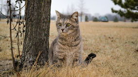 Cutie cat. Very cute cat near the tree royalty free stock images
