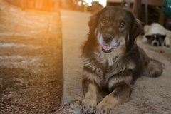 Cutie dog waiting for its owner on the floor indoor , Sunshine effect Stock Photography