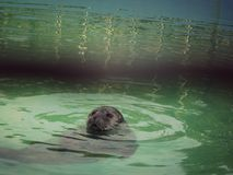 Cutie pływanie zdjęcie royalty free