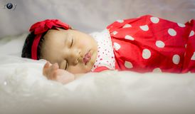 Cutie pie Royalty Free Stock Photo