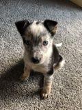 Puppy stock photos