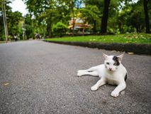 Cutie cat in the park. Cutie white and black cat in the park stock images