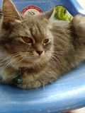 Cuties cat Royalty Free Stock Image