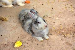 Cuties de lapin Photos libres de droits