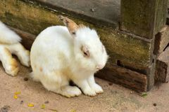 Cuties do coelho Imagem de Stock