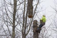 Cuting träd för man arkivfoton