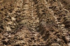 Cutivation des pommes de terre Images stock