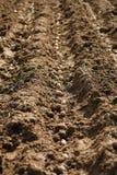 Cutivation des pommes de terre Photos libres de droits