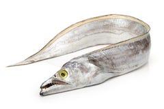 Free Cutlass Fish Royalty Free Stock Photos - 124941398