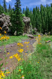 New Mexican alpine landscape with river and flowers Royalty Free Stock Photos