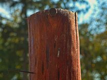 Cutoff tree trunk without bark, close up.  royalty free stock photography