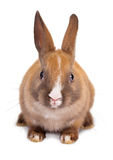 Cutout rabbit Royalty Free Stock Photos