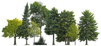 Free Cutout Tree Line. Coniferous And Decidious Mixed Forest. Royalty Free Stock Photos - 160380098