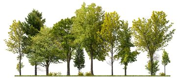 Free Cutout Tree Line. Coniferous And Decidious Mixed Forest. Royalty Free Stock Image - 160380316