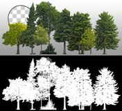 Cutout tree line. Coniferous and decidious