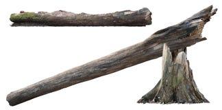 Cutout tree stump. Broken tree