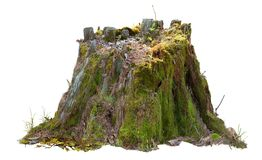 Cutout tree stump. Mossy trunk