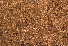 Cuts of dried tobacco royalty free stock images