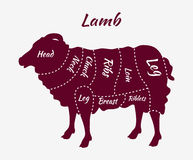 Cuts of Lamb or Mutton Diagram Stock Images
