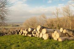 Cutted木材树干在富兰德森林秋天 免版税库存图片