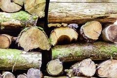 Cutted木头在法国乡下 库存图片