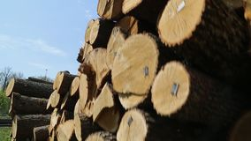 cutted树杂乱的一团  股票录像