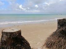 cutted棕榈树树干在海滩的 免版税库存照片