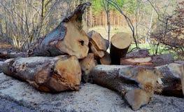 Cutted结构树 库存照片