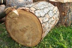cutted木头 库存图片