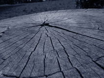 Cutted-Baum Lizenzfreie Stockfotos