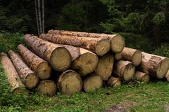 Cutted-Baumstämme im Holz stockbild