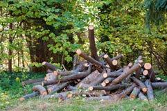 Cutted bukowy drewno Fotografia Stock